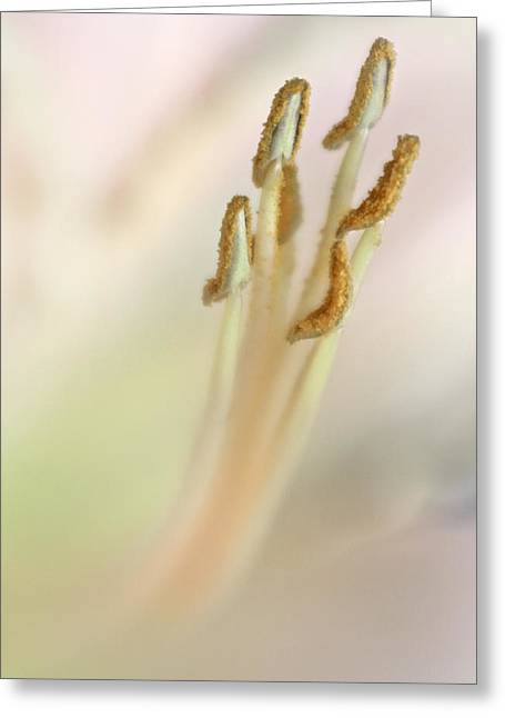 Day Lily Greeting Cards - Day Lily Macro Greeting Card by David and Carol Kelly