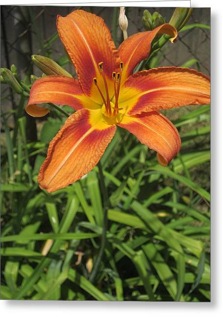 Guy Ricketts Photography Greeting Cards - Day Lily Smile Greeting Card by Guy Ricketts