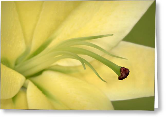 Botany Greeting Cards - Day Lily Greeting Card by Susan Candelario