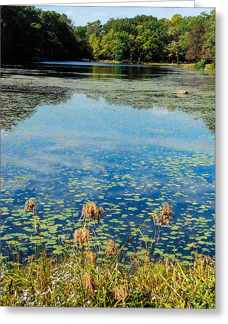 Water Lilly Greeting Cards - Day Pond State Park Westchester Connecticut Greeting Card by Robert Ford