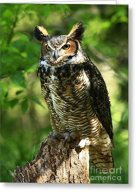 Shelley Myke Greeting Cards - Daybreaks Gentle Caress Majestic Great Horned Owl in the Forest  Greeting Card by Inspired Nature Photography By Shelley Myke