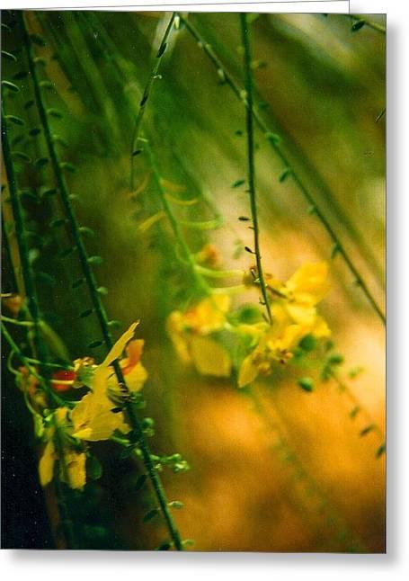 Robert Bray Greeting Cards - Daydream Greeting Card by Robert Bray