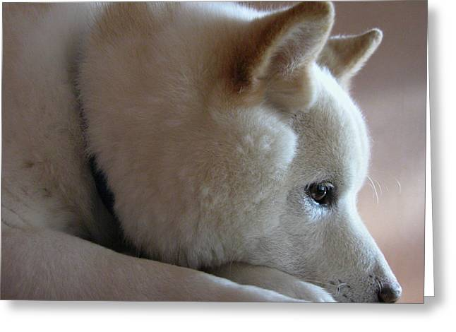 Japanese Puppy Greeting Cards - Daydreamer Greeting Card by Stuart Turnbull