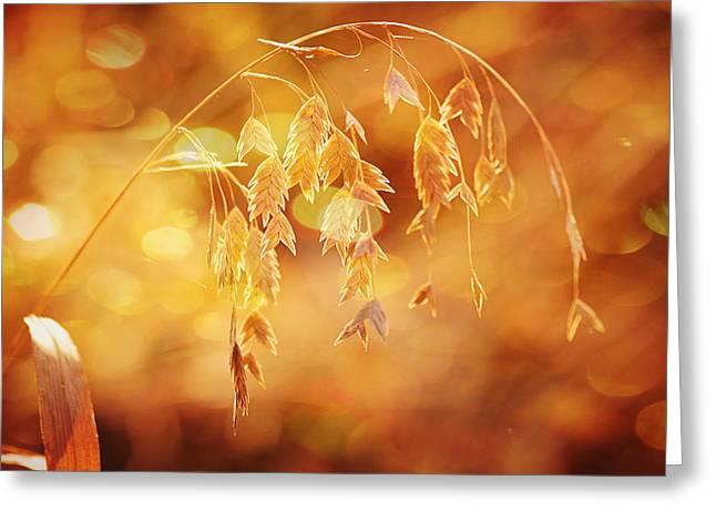 Elizabeth Budd Greeting Cards - Daydreams in the Meadow Greeting Card by Elizabeth Budd