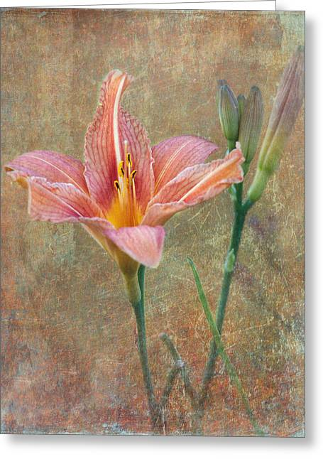 Enhanced Greeting Cards - Daylily Greeting Card by Angie Vogel
