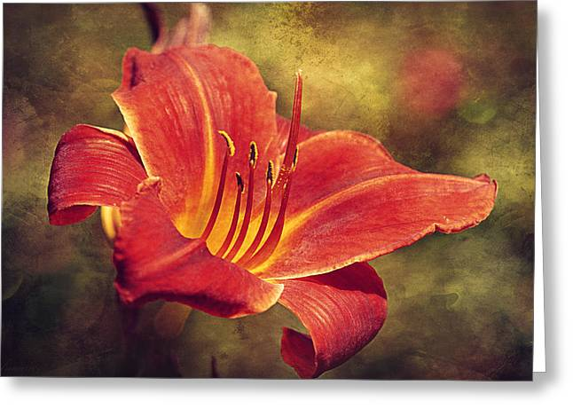 Stamen Digital Greeting Cards - Daylily Greeting Card by Maria Angelica Maira