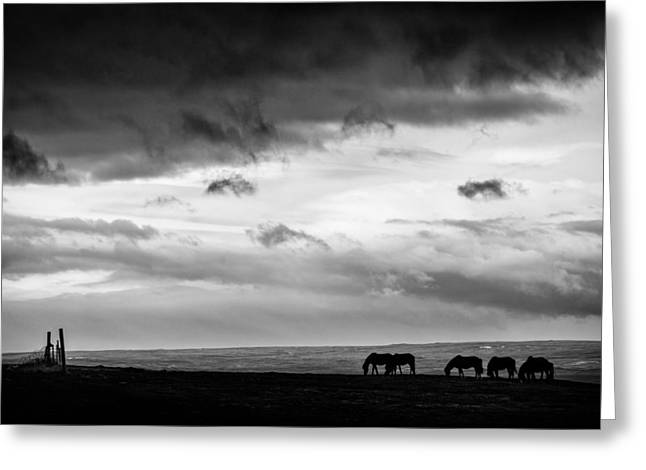 Horses Art Print Greeting Cards - Days End at Hvammstangi Greeting Card by Dave Bowman