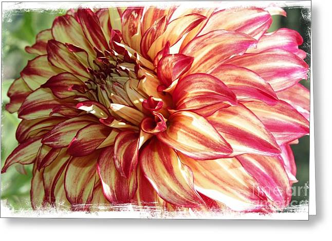 Textured Floral Greeting Cards - Dazzling Dahlia with Border Greeting Card by Carol Groenen
