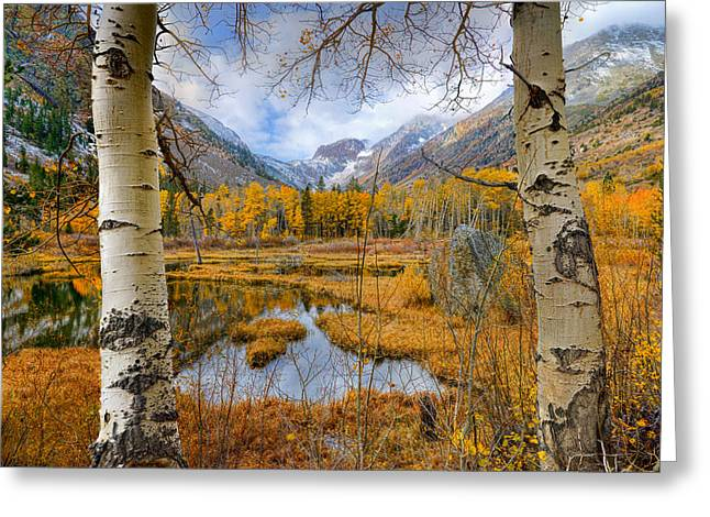 Beauty Mark Photographs Greeting Cards - Dazzling Fall Foliage Greeting Card by Mark Whitt