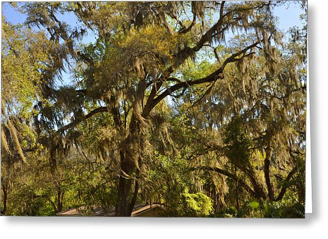 De Leon Springs - Classic Old Florida Greeting Card by Christine Till
