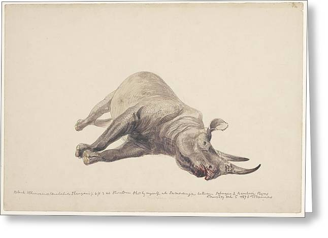 Eutheria Greeting Cards - Dead black rhinoceros, artwork Greeting Card by Science Photo Library