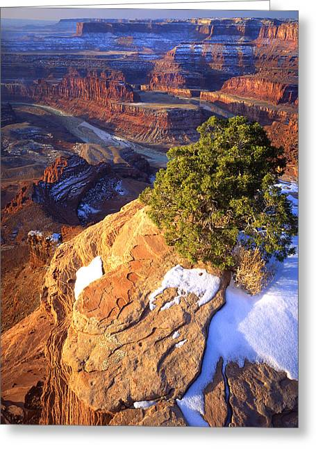 Goosenecks State Park Greeting Cards - Dead Horse Point Greeting Card by Ray Mathis