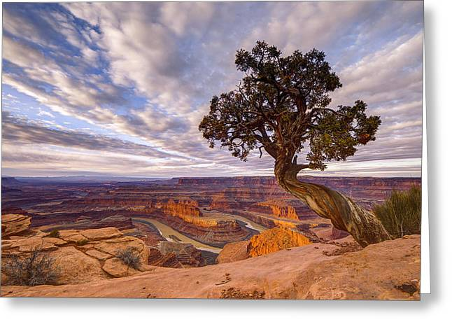 Lone Horse Greeting Cards - Dead Horse Point Sunrise Greeting Card by Dustin  LeFevre