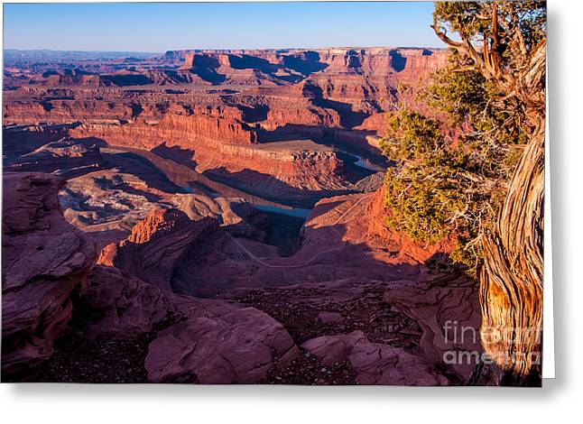 Dead Horse Point Greeting Cards - Dead Horse Point Sunrise - Utah Greeting Card by Gary Whitton