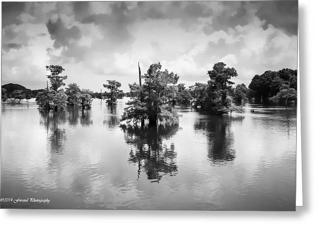 Reflections Of Trees In River Greeting Cards - Dead Lakes Black and White Greeting Card by Debra Forand