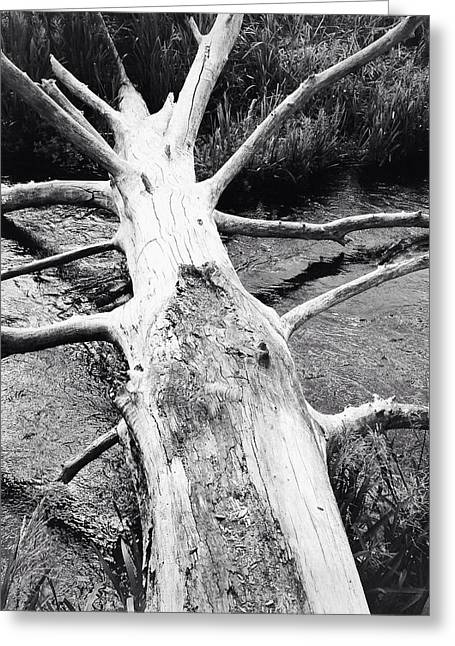 Stream Greeting Cards - Dead log Greeting Card by Les Cunliffe