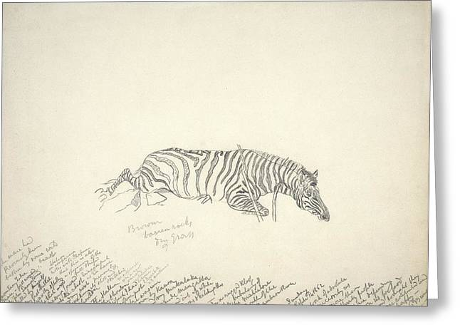 Eutheria Greeting Cards - Dead mountain zebra, artwork Greeting Card by Science Photo Library
