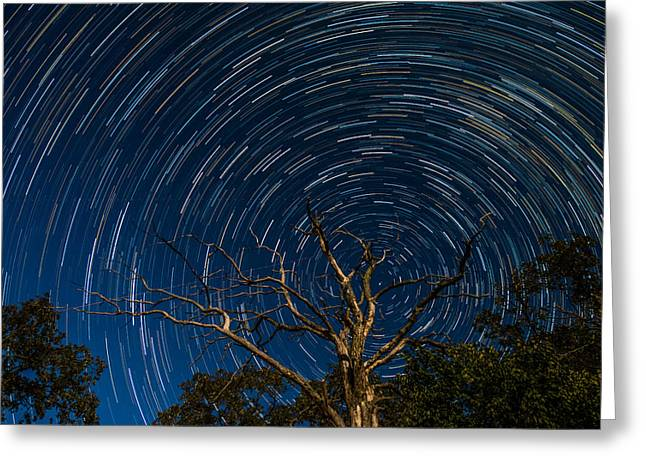 Rotation Photographs Greeting Cards - Dead oak with star trails Greeting Card by Paul Freidlund