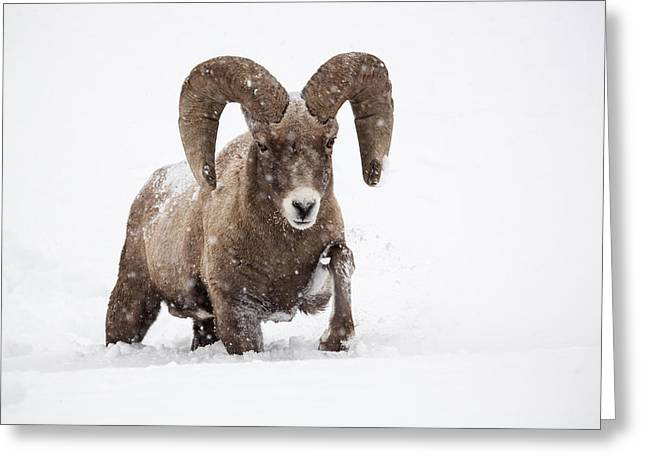 Snow Drifts Greeting Cards - Dead of Winter Greeting Card by Sandy Sisti