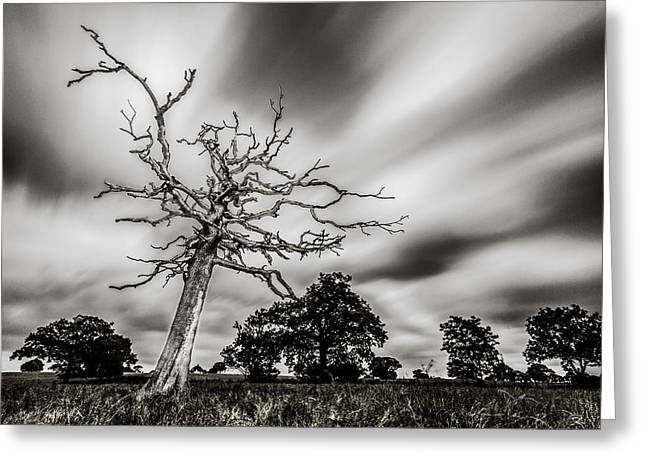 Dead Tree Greeting Cards - Dead or Alive Greeting Card by Ian Hufton