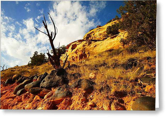 DEAD TREE AGAINST THE BLUE SKY Greeting Card by Jeff  Swan