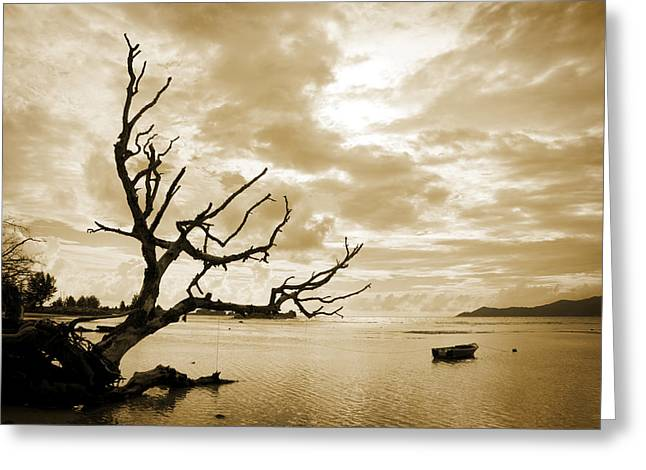 Black Tie Greeting Cards - Dead Tree And Sea Greeting Card by Alexey Stiop