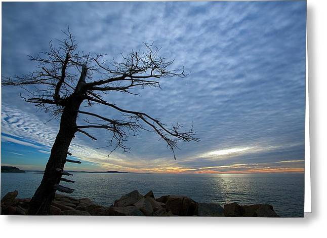 White Photographs Greeting Cards - Dead Tree at Otter Cliffs Greeting Card by Stuart Litoff
