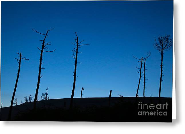 """south West France"" Greeting Cards - Dead tree blues Greeting Card by Csilla Szabo"