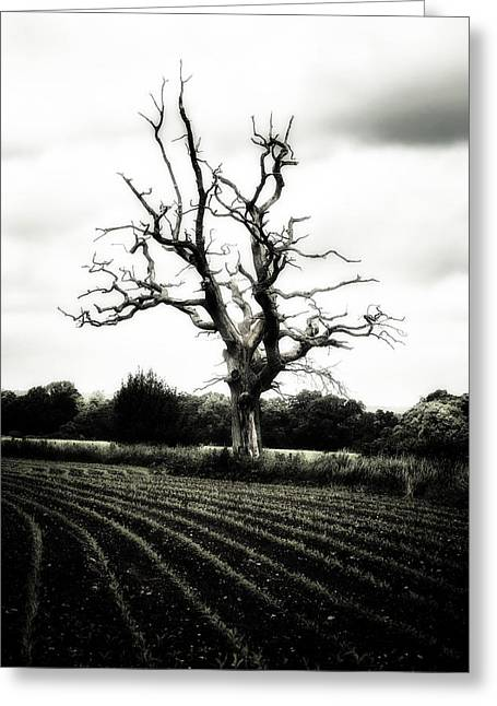 Bleak Greeting Cards - Dead Tree Greeting Card by Joana Kruse