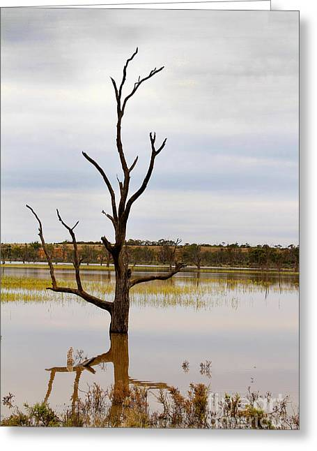 Scenic Greeting Cards - Dead Tree Greeting Card by John Wallace