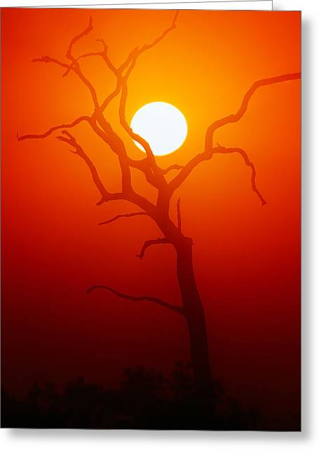 Evening Lights Greeting Cards - Dead Tree silhouette and glowing sun Greeting Card by Johan Swanepoel