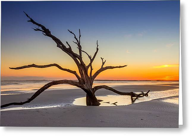 Best Ocean Photography Greeting Cards - Dead Tree Sunset Greeting Card by Pierre Leclerc Photography