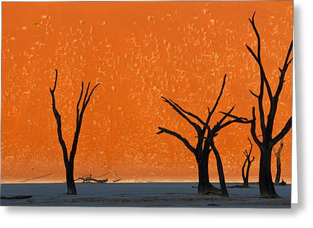 Dead Trees By Red Sand Dunes, Dead Greeting Card by Panoramic Images