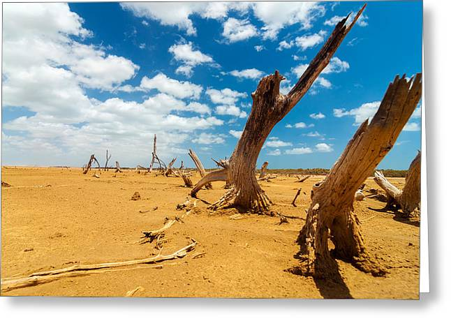 Lifeless Greeting Cards - Dead Trees in a Desert Wasteland Greeting Card by Jess Kraft