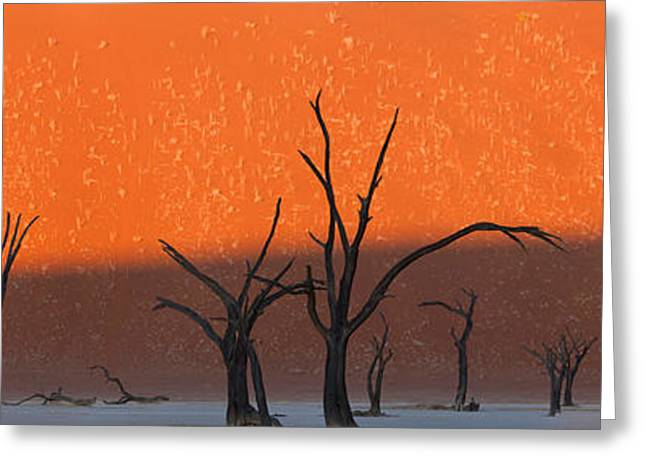 Dead Tree Greeting Cards - Dead Trees In Dry Clay Pan, Dead Vlei Greeting Card by Panoramic Images
