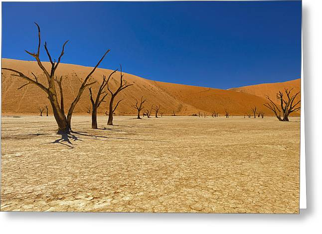 Sossusvlei Area Greeting Cards - Dead Trees in Naukluft Park Namib Desert Greeting Card by Paul W Sharpe Aka Wizard of Wonders