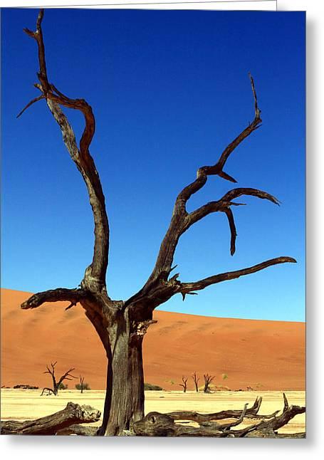 West Africa Greeting Cards - Dead Vlei Fork Tree Greeting Card by Aidan Moran