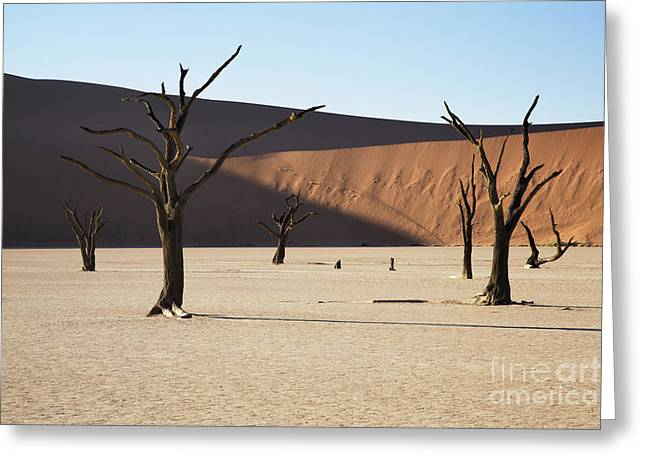 Reserve Greeting Cards - Dead Vlei Greeting Card by Richard Garvey-Williams