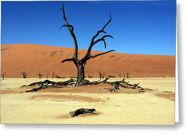 African Heritage Greeting Cards - Dead Vlei Tree - Namibia Greeting Card by Aidan Moran