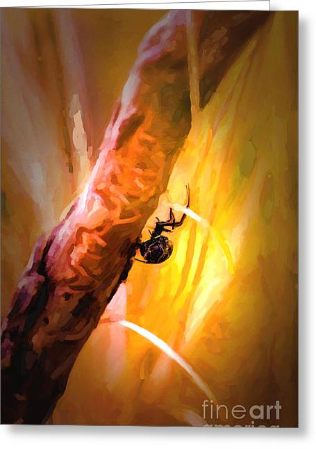 Black Widow Greeting Cards - Deadly Greeting Card by Jon Burch Photography