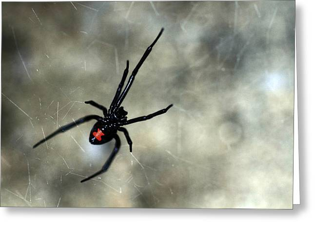 Black Widow Greeting Cards - Deadly Greeting Card by Shelby Waltz