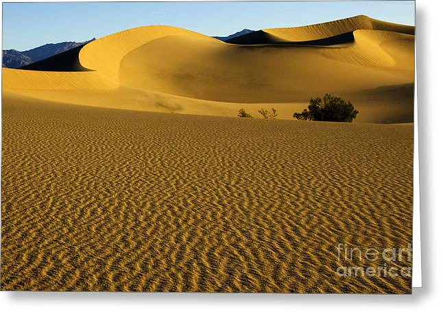 Sand Pattern Greeting Cards - Death Valley California Gold 3 Greeting Card by Bob Christopher