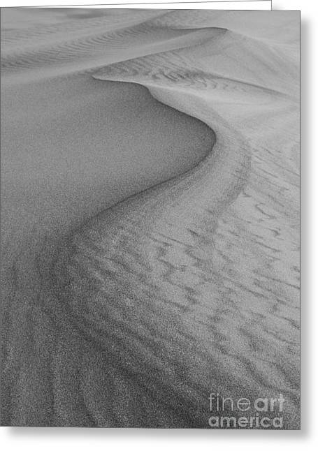 Landforms Greeting Cards - Death Valley Sand Dunes Greeting Card by Juli Scalzi