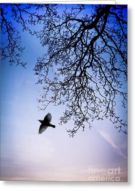 Flying Bird Greeting Cards - December Chill Greeting Card by Jan Bickerton