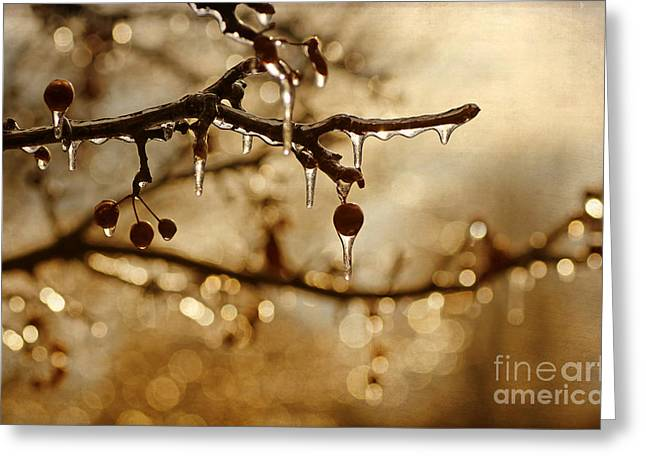 Snowy Woods Greeting Cards - December Ice Greeting Card by Darren Fisher