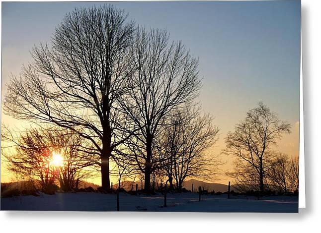 December Sundown Through The Trees Greeting Card by Joy Nichols