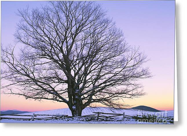 December Twilight Greeting Card by Alan L Graham
