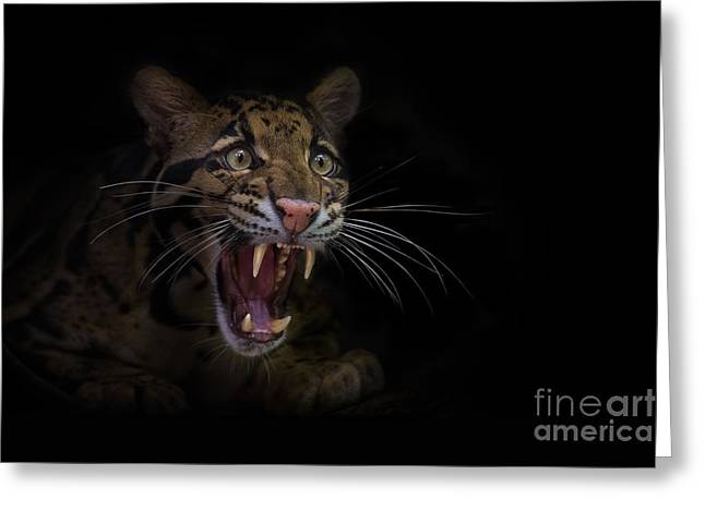 Deceptive Expressions Greeting Card by Ashley Vincent