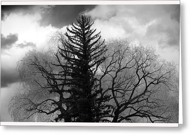 Inconsistencies Greeting Cards - Deciduous and Pine Trees New Mexico Greeting Card by Mark Goebel