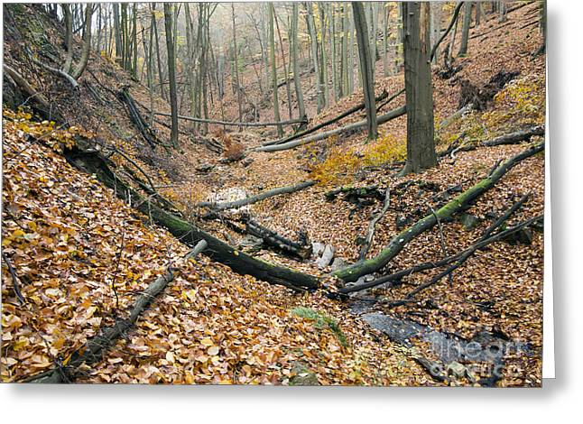 Rill Greeting Cards - Deciduous Forest With Ravines Greeting Card by Michal Boubin